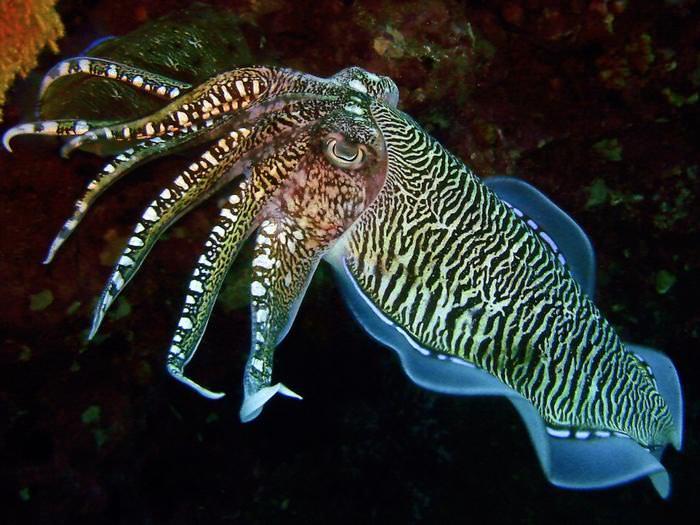 Choco, animal aquático mutante que muda de cor