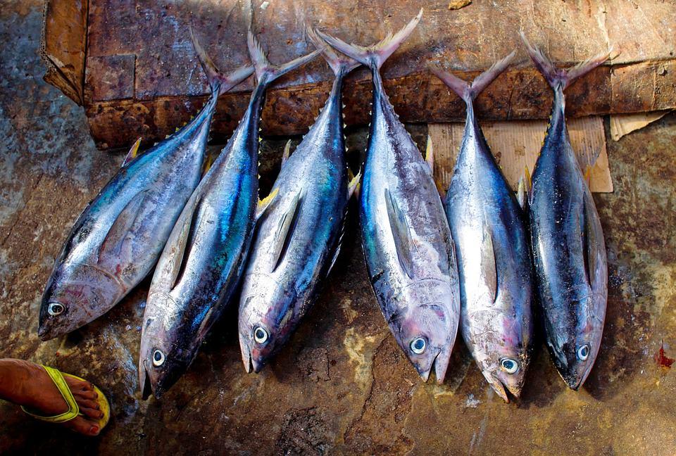 peixes são bom alimento para quem tem problemas de sono