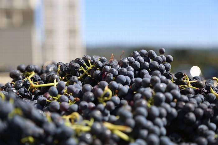 benefícios do vinho tinto para a saúde