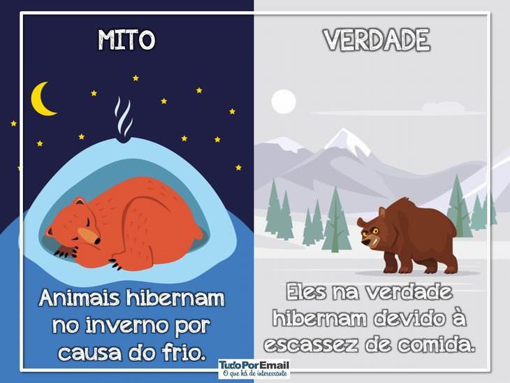 mitos e verdades sobre animais selvagens