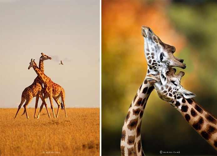 animais, bichos