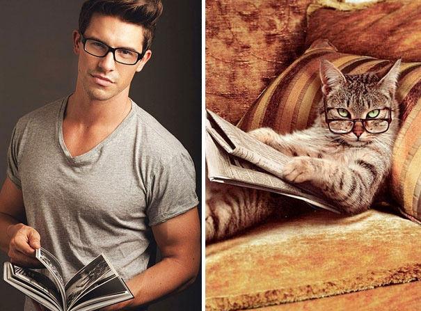 gatos, gatões