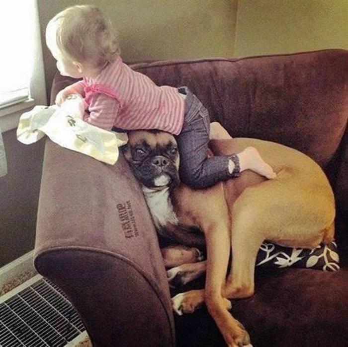 cães, cachorros