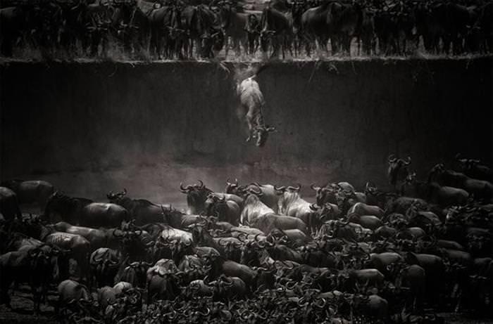 animais, migração