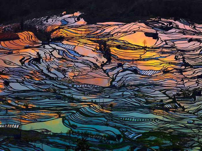 plantação, arroz