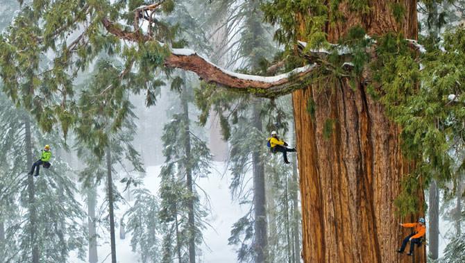 árvore gigante