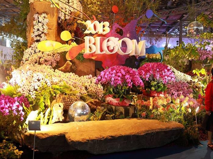 orquídeas, flores, árvores