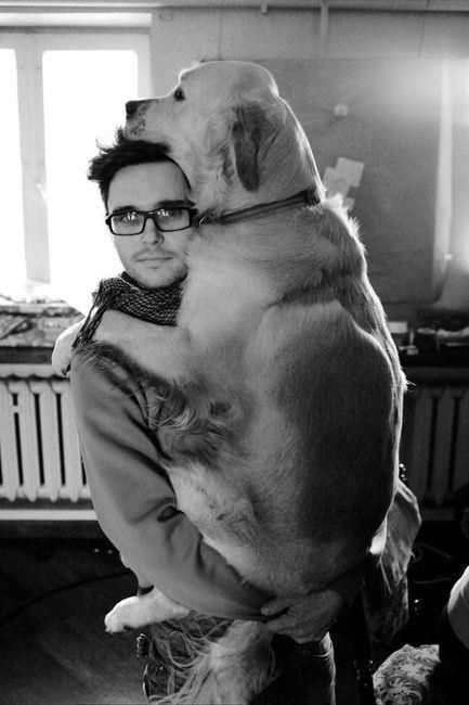 cachorros, cães