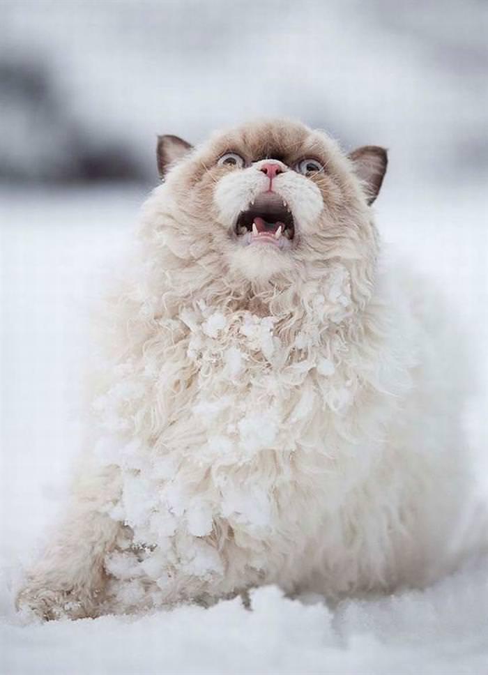 animais, bichos, neve