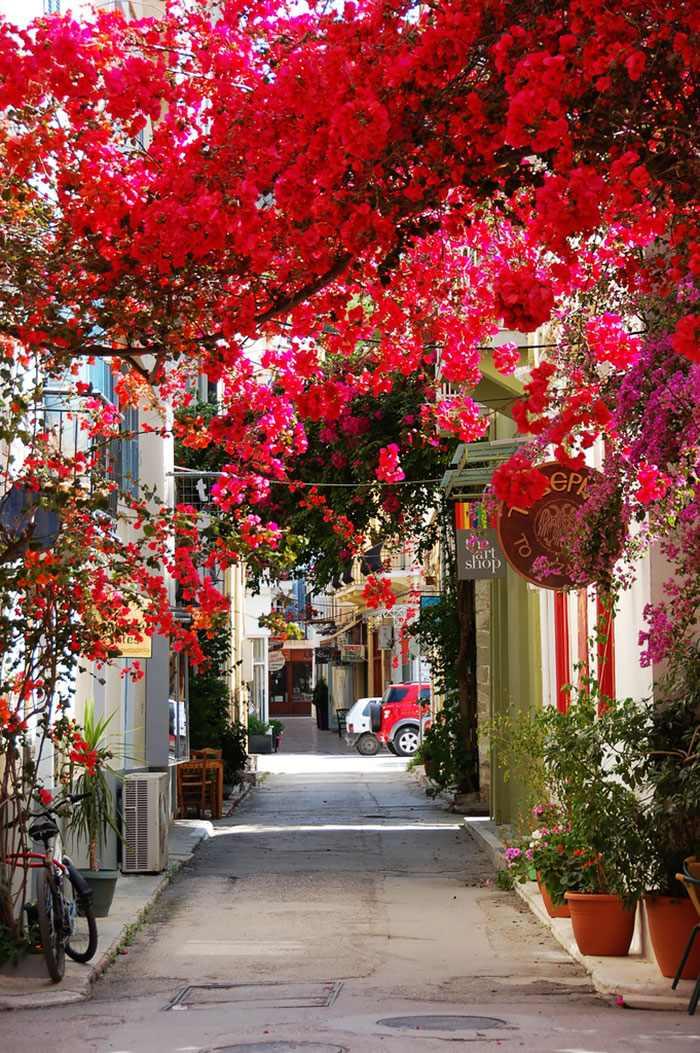 ruas, floridas