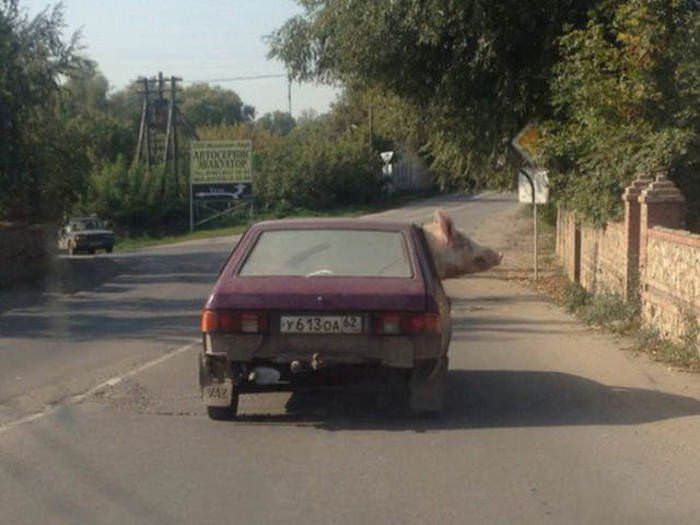 Coisas Que Você Só Vê Na Rússia