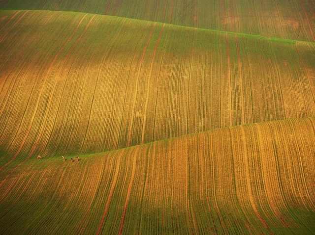 Campos do Planeta Terra