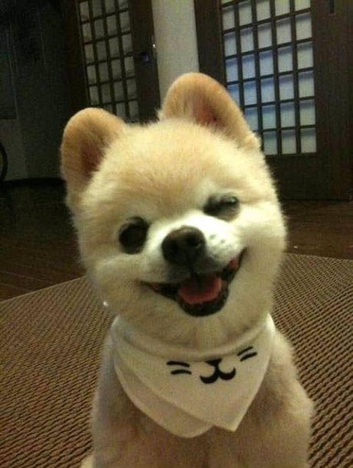 Cachorros sorridentes!