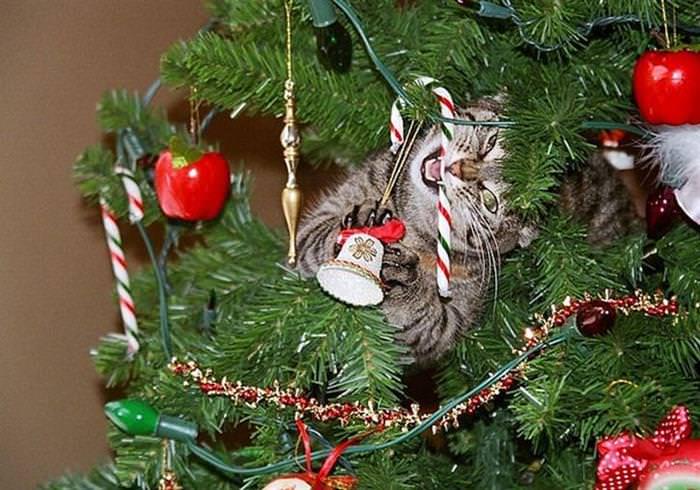 Neste Natal, Cuidado Com Seus Bichos de Estimação!