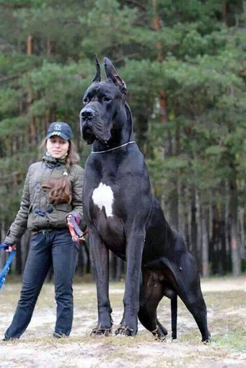 Animais domésticos gigantes