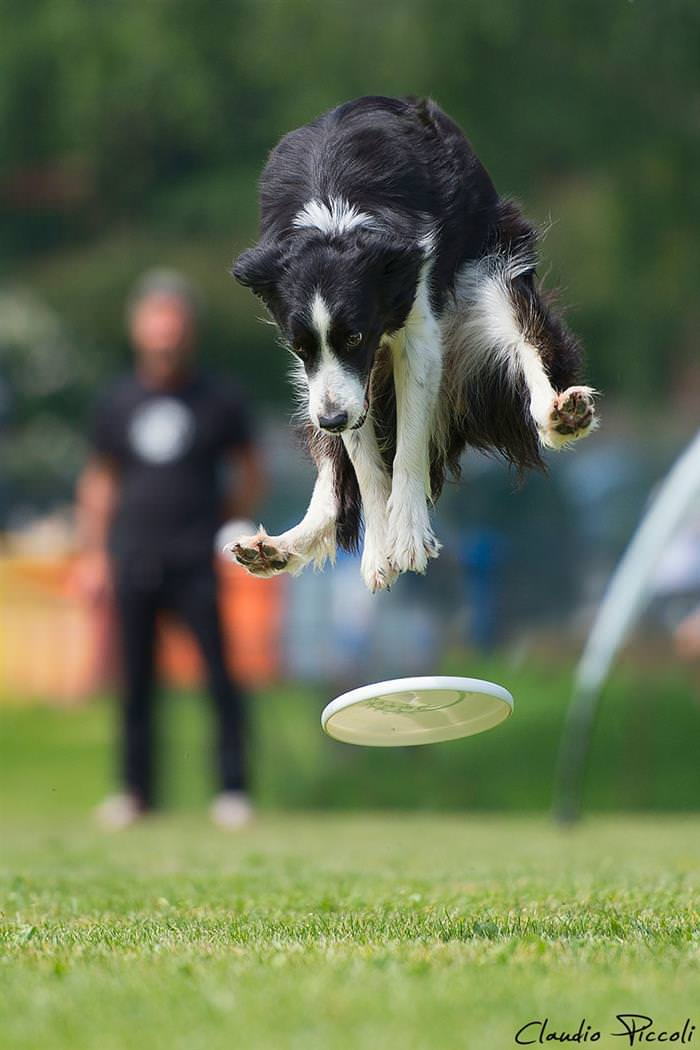 Cachorros voadores