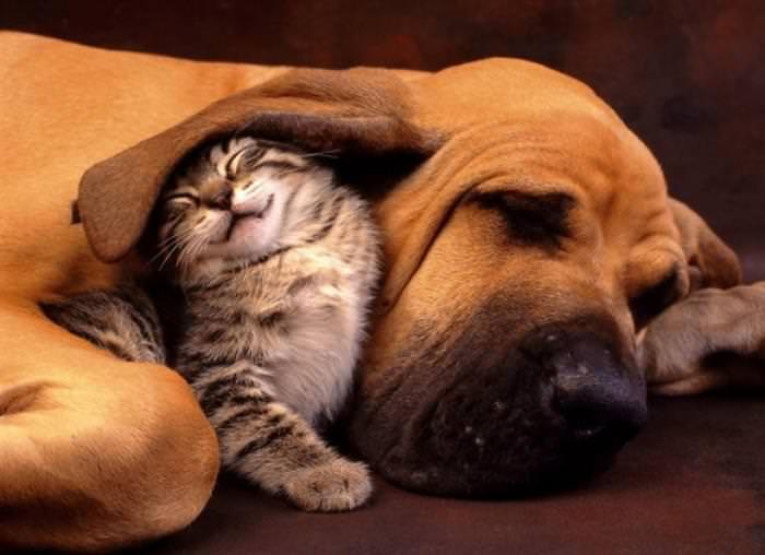 Animais fofo dormindo juntos