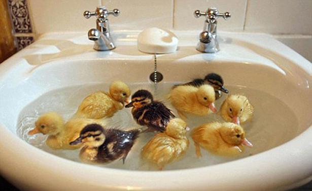 Animais Fofos no Banho