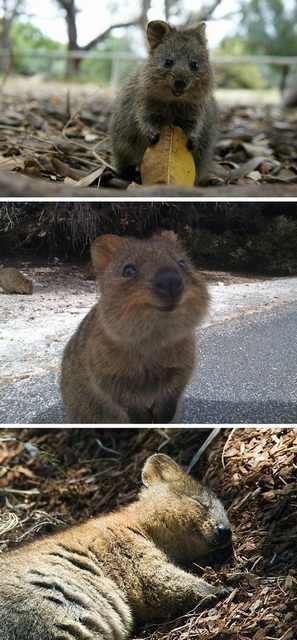 animais, felicidade