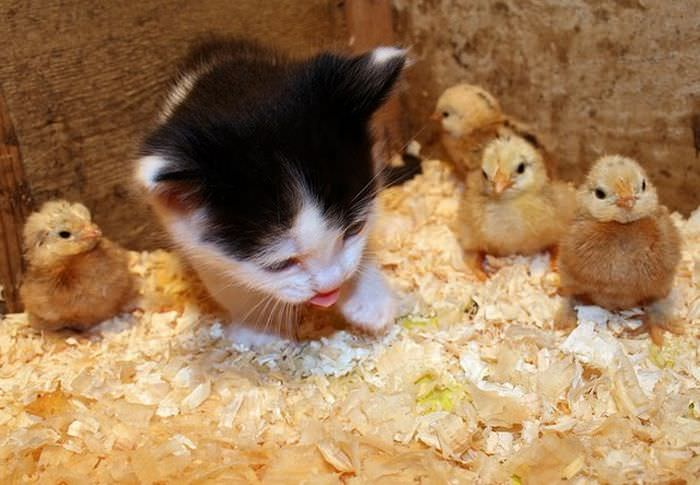 animais pequenos