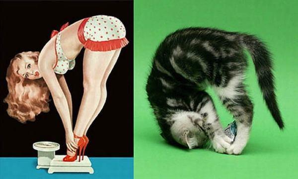 gatinhas, modelos