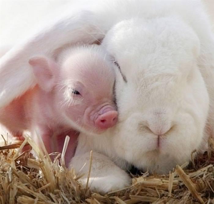 soneca, animais, amigos