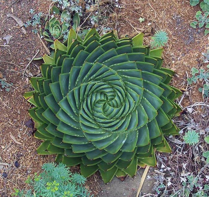 natureza, geometria