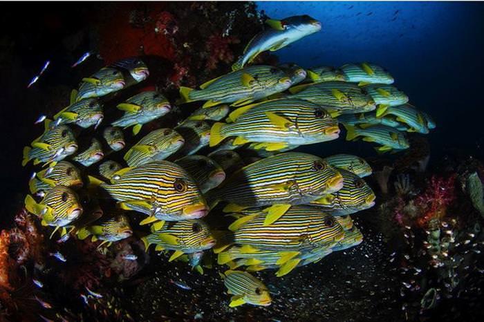 peixes, mar
