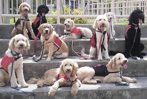 Fatos Sobre Cães