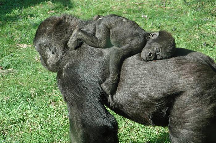Mães Incríveis Estão Em Todo Lugar!
