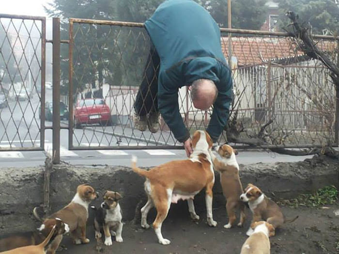 Um FantAUstico Tributo Aos Cachorros