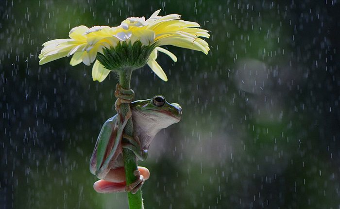 guarda-chuvas, animais