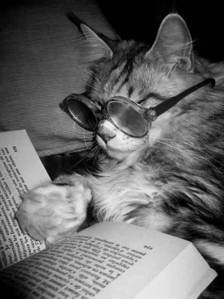 animais estudando