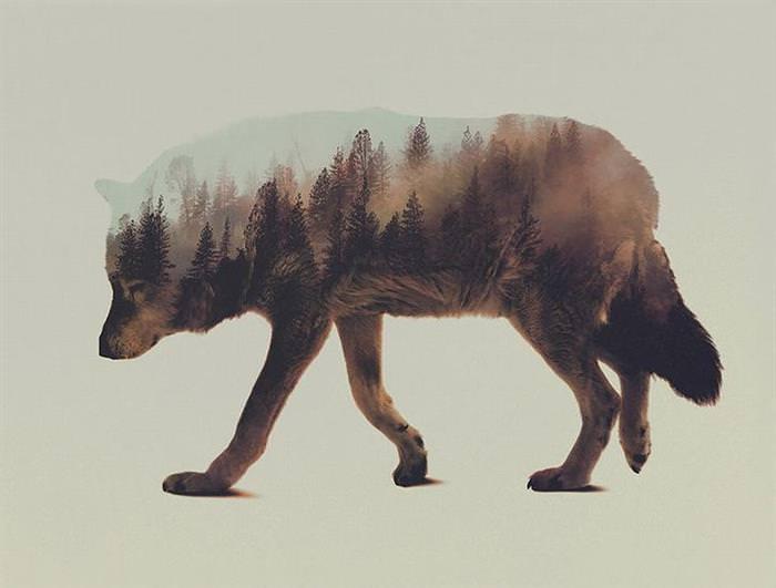 Fotos de Animais e Florestas em Dupla Exposição