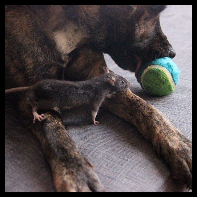 Osiris e Riff Rat, a dupla mais linda da Internet