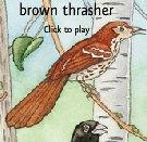 Ouça às Lindas Canções dos Pássaros Americanos