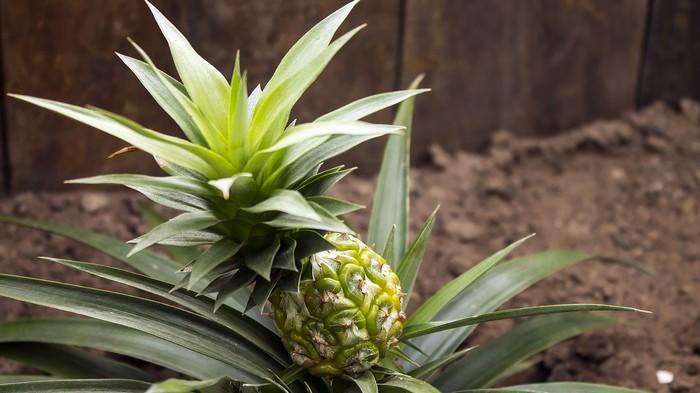 Os 10 Vegetais Mais Fáceis De Plantar Em Um Vaso