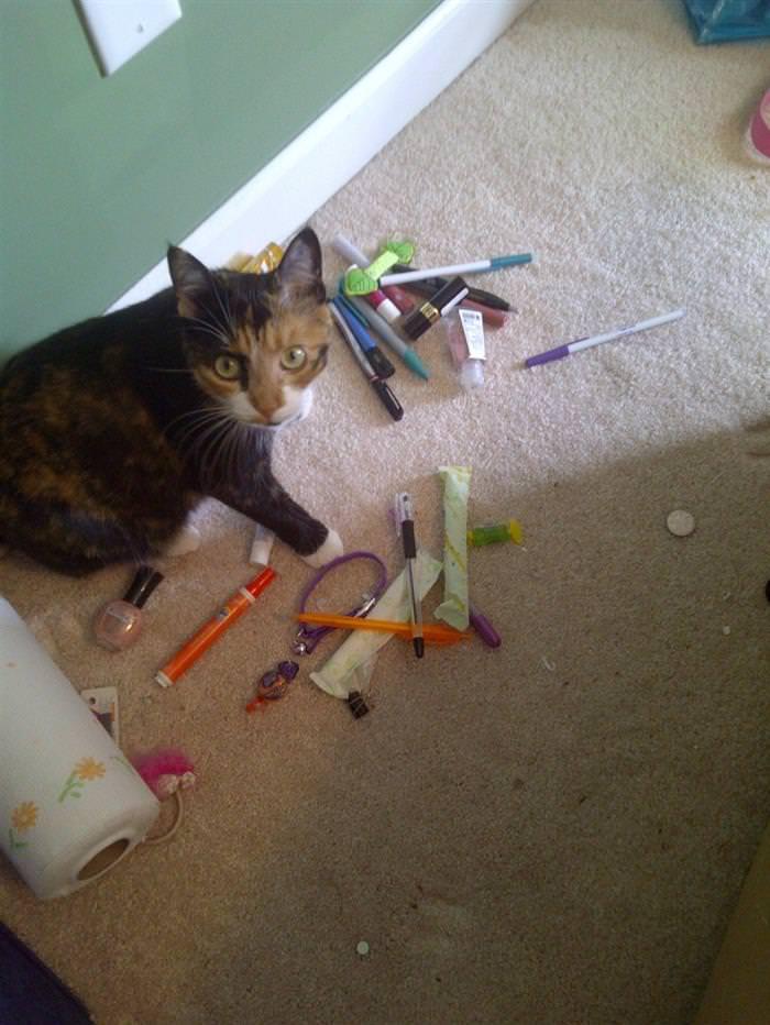 12 Gatos Acumuladores