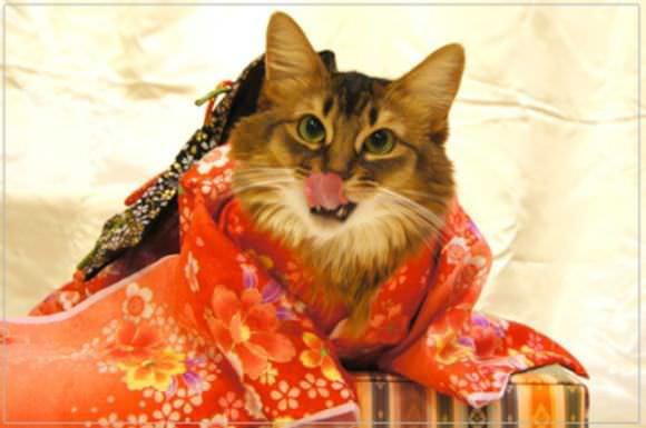 gatas, quimonos
