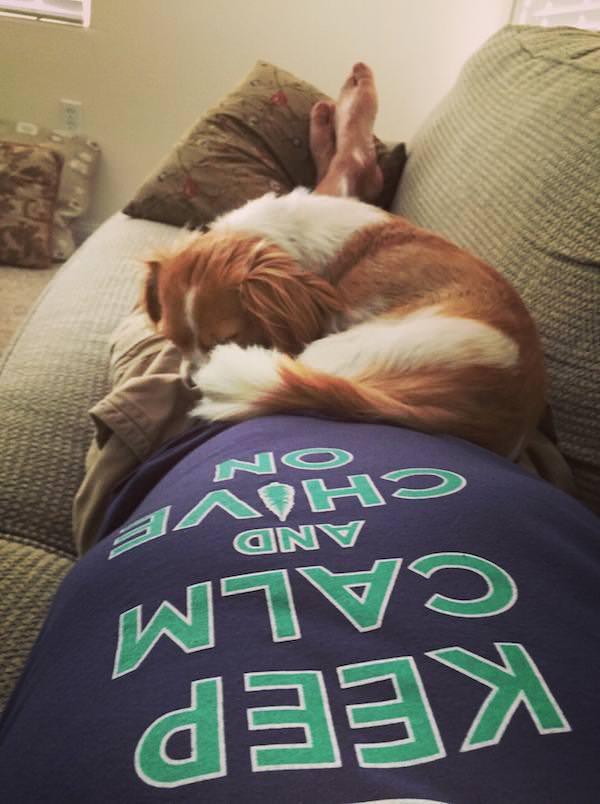 Adoráveis Cães