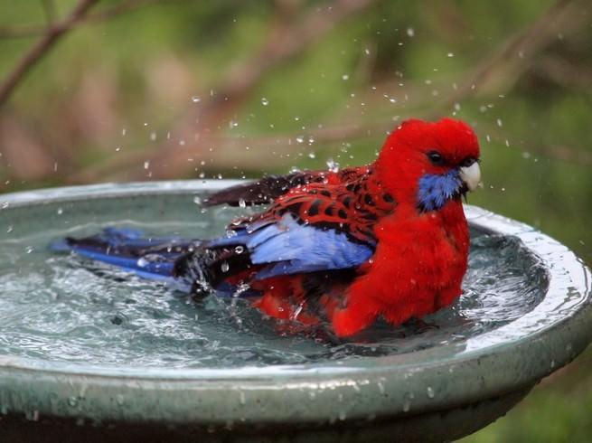 fauna, Austrália