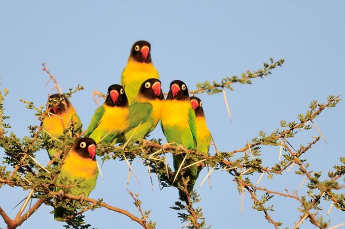 aves, pássaros