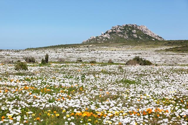 flora, áfrica sul