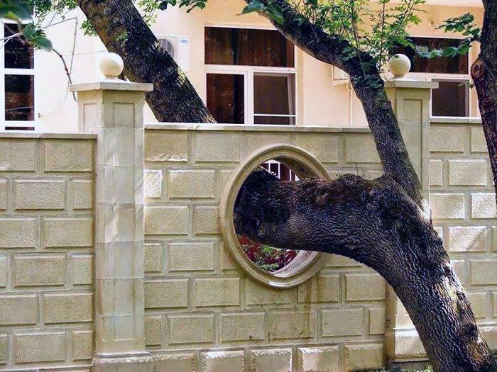 árvores, casas
