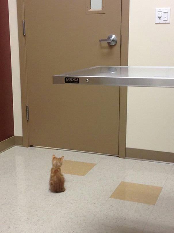 15 gatos no veterinário