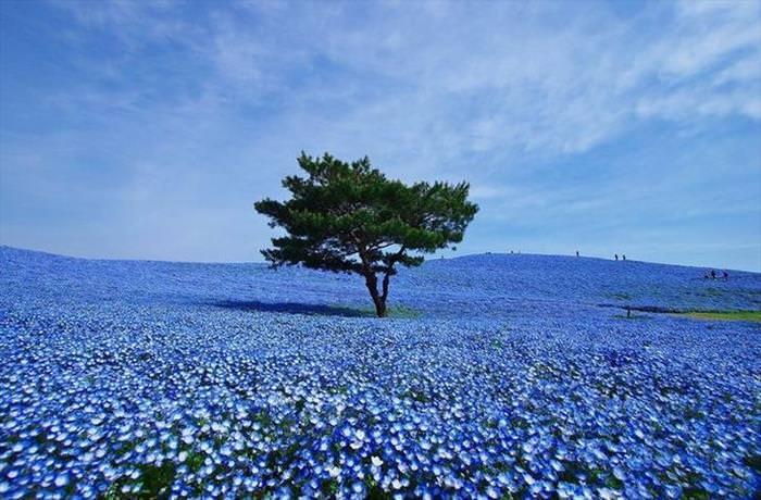 Azuis da Natureza