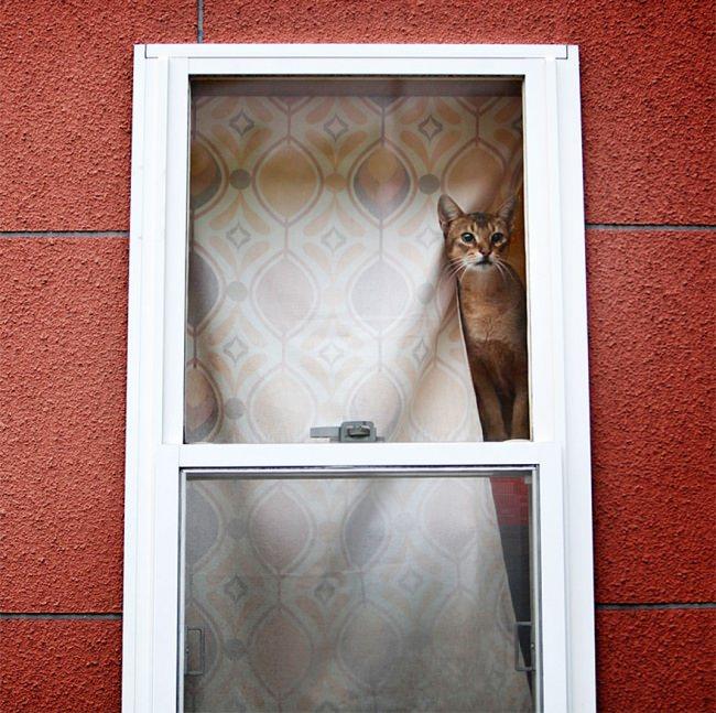 Gatinhos solitários