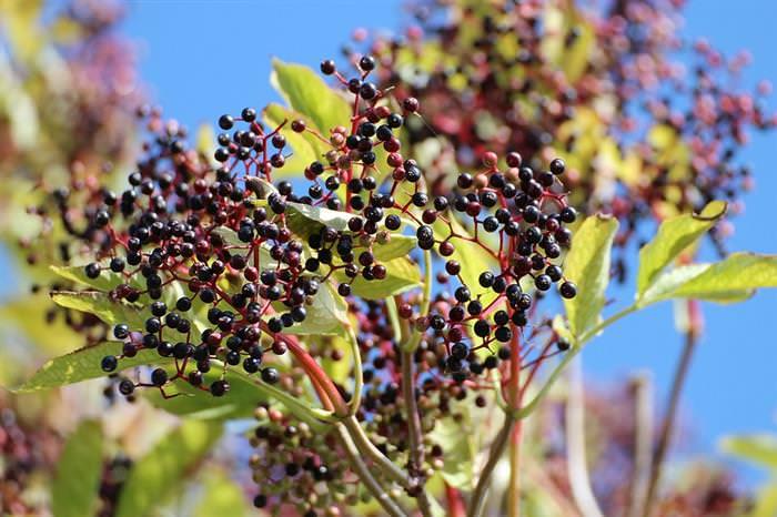 Cura Natural: Ervas e Especiarias