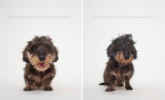Cães antes e depois do banho
