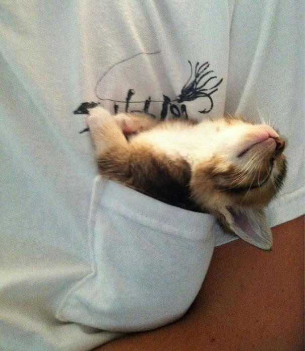 Animais que Dormem de Qualquer Jeito